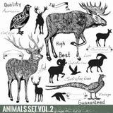 El sistema de la mano del vector dibujado detalló animales salvajes Foto de archivo libre de regalías