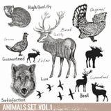 El sistema de la mano del vector dibujado detalló animales del bosque Imagen de archivo libre de regalías