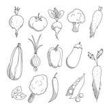 El sistema de la mano linear dibujado bosquejó verduras: tomate, cebolla, remolachas, calabacín, berenjena, pimientas, bróculi, g Fotografía de archivo