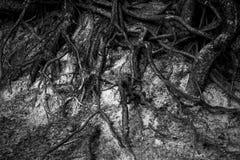 El sistema de la raíz de árboles Fotos de archivo libres de regalías