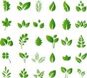 El sistema de los elementos verdes del diseño de las hojas para usted diseña Imágenes de archivo libres de regalías
