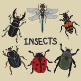 El sistema de los insectos que vuelan de a mano libre illustration