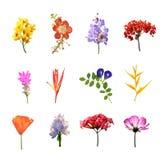 El sistema de muchas flores del colouul aisló la colección en blanco Fotos de archivo libres de regalías