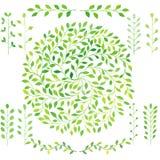 El sistema de plantas verdes de la acuarela, laurel se va, círculo deja el emb Imagen de archivo