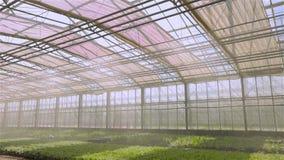El sistema de riego autom?tico de plantas en el invernadero, sistema de irrigaci?n de la irrigaci?n en un invernadero moderno E almacen de metraje de vídeo