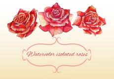 El sistema de tres aisló rosas en alto de la acuarela Fotos de archivo