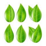El sistema de verde realista sale de la colección Ilustración del vector Fotos de archivo libres de regalías