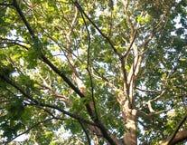 El sistema del sol de la luz blanca que brilla intensamente en tronco del detalle del árbol raspa y las hojas Foto de archivo libre de regalías