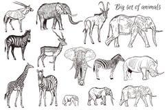 El sistema del vector de la mano dibujado detalló el animal africano stock de ilustración