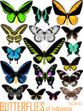 El sistema del vector de mariposas de Indonesia aisló en blanco stock de ilustración