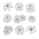 El sistema dibujado mano del vector de los contornos de las flores subió, del lirio, de la peonía y del crisantemo aislados en el stock de ilustración