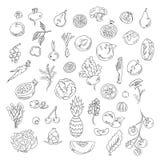 El sistema garabatea verduras y las frutas de los elementos Comida de Vegeyarian Foto de archivo libre de regalías