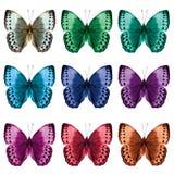 El sistema hermoso de las mariposas de Junglequeen del camboyano en variou Imágenes de archivo libres de regalías
