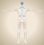 El sistema nervioso humano Fotografía de archivo libre de regalías