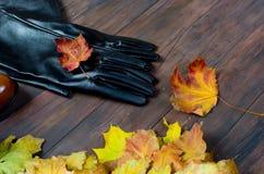 El sistema plano de la endecha de femenino viste en estilo del otoño Imágenes de archivo libres de regalías