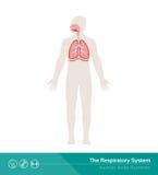 El sistema respiratorio Fotos de archivo libres de regalías