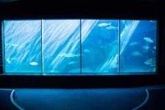 El sitio más oscuro con un acuario imagen de archivo libre de regalías