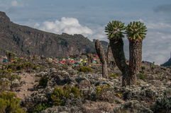 El sitio para acampar, Barranco, Kilimanjaro foto de archivo