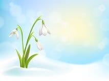 El snowdrop de la primavera florece con nieve en fondo con el cielo azul, el sol y las luces borrosas del bokeh Ilustración del v Imagen de archivo