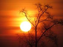 El sol Fotos de archivo libres de regalías