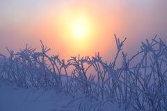 El sol anaranjado ilumina los arbustos Foto de archivo