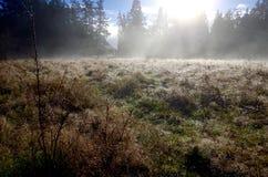 El sol brilla a través de la niebla de la mañana en un campo rodeado por los árboles de hoja perenne fotos de archivo