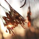 El sol brilla a través de las hojas secas en el árbol Foto de archivo