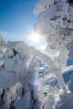 El sol brilla a través de los árboles nevados Fotos de archivo libres de regalías