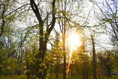 El sol brillante detrás de ramas en el parque en un día de primavera muy hermoso imagenes de archivo