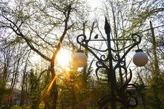 El sol brillante detr?s de ramas en el parque en un d?a de primavera muy hermoso fotos de archivo