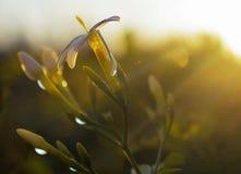 El sol caliente del invierno ilumina las flores Imágenes de archivo libres de regalías