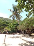El sol crepuscular tropical destaca la palma Fotografía de archivo