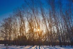 El sol de la mañana brilla a través de los árboles en bosque del invierno Imágenes de archivo libres de regalías