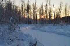El sol de la mañana del invierno brilla a través de los árboles del bosque de la nieve Fotos de archivo