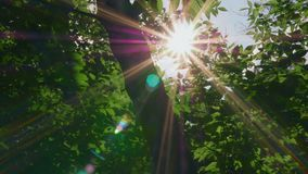 El sol de la madrugada sube a través de manzanos en la salida del sol