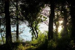 El sol de la tarde irradia a través de los árboles, árboles en el sol, rayo de sol a través de los árboles, trayectoria en el par Foto de archivo