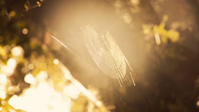 ¡El sol de la telaraña! Fotos de archivo