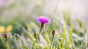 El sol del invierno del oro en último verde del otoño se va y las últimas flores Fotografía de archivo libre de regalías
