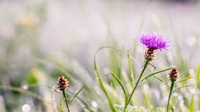 El sol del invierno del oro en último verde del otoño se va y las últimas flores Foto de archivo libre de regalías