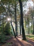 El sol del otoño brilla a través de los árboles Foto de archivo libre de regalías