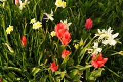 El sol destaca los colores brillantes de flores francia imagen de archivo libre de regalías