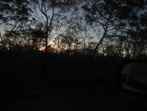 El sol detrás de los árboles Imagen de archivo libre de regalías