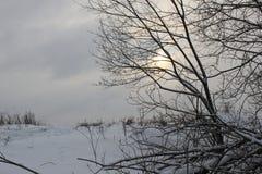 El sol detrás del árbol Imagen de archivo libre de regalías