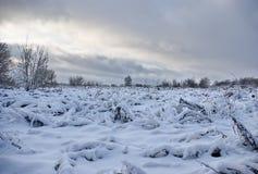El sol, el aire fresco y es mucha nieve Fotos de archivo