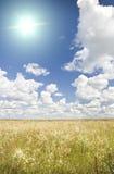 El sol en cielo azul arriba del prado floral. Foto de archivo libre de regalías