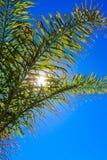 El sol en el cielo azul brilla a través de hojas de palma foto de archivo