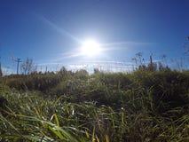 El sol en el cielo azul brilla en una lente y la hierba verde que ha doblado abajo debajo del viento en el primero plano Imagenes de archivo