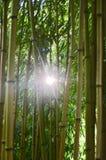 El sol en el jardín de bambú es mágico y fuerte imagen de archivo
