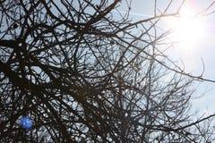 El sol en la primavera a través de las ramas de un árbol sin las hojas foto de archivo