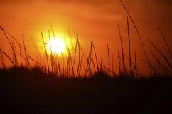El sol en los tallos de las calabazas de la puesta del sol de hierbas salvajes minimalism foto de archivo